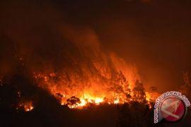 Kebakaran hutan di Gunung Lawu meluas