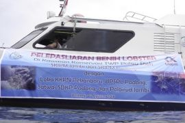 BKIPM lepasliarkan 92.480 benih lobster di Sumbar