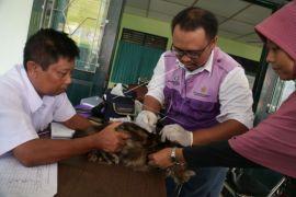 Penyuntikan vaksin hewan peliharaan cegah rabies