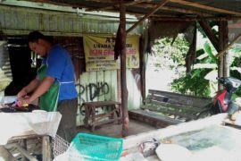 Pedagang berharap ada upaya fasilitasi budidaya ikan gabus