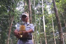 Anugerah Kalpataru setelah 30 tahun menjaga hutan