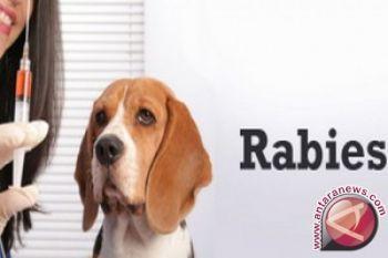 Dinkes Batanghati mencatat kasus gigitan hewan tersangka rabies masih tinggi