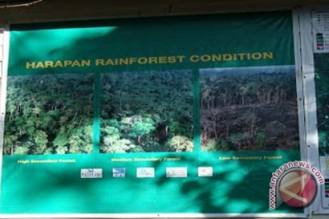 Reki: Hutan Harapan terbakar sebagian di area konflik