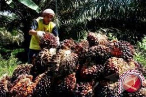 Harga CPO Jambi naik Rp41 per kilogram