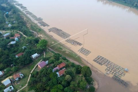 Budi daya ikan Sungai Batanghari