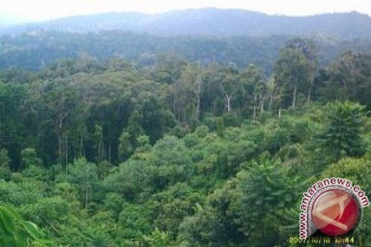 Aktivitas perambahan hutan lindung Tahura masih tinggi