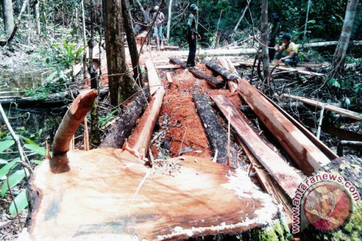 Catatan Akhir Tahun- Menjaga Hutan Harapan yang tersisa di Sumatra