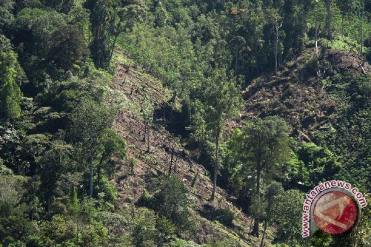 Hutan produksi Indonesia 68,85 juta hektare