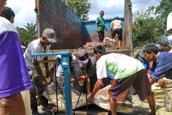 Dinas Koperasi Jambi bentuk koperasi petani karet