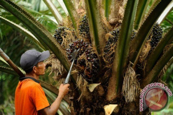 Italia dukung sawit Indonesia di Uni Eropa