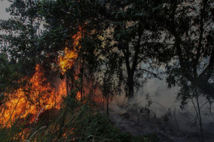 BMKG deteksi 103 titik panas di Riau