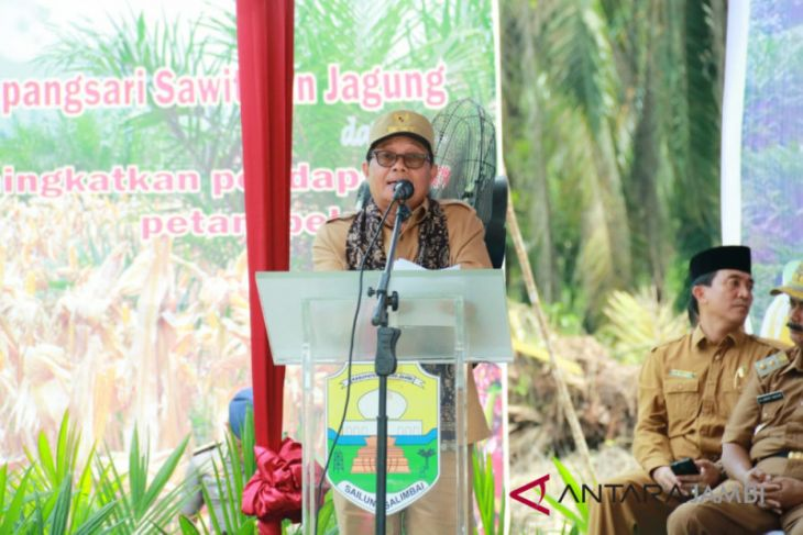 Fachrori: replanting sawit upaya meningkatkan kesejahteraan petani