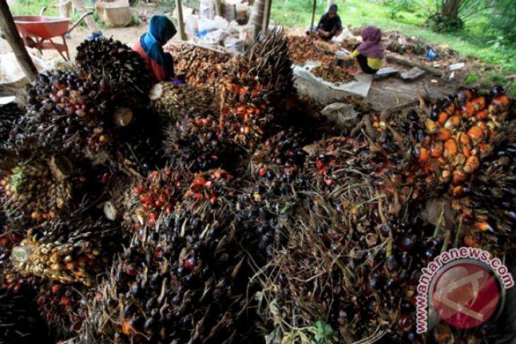 Moratorium sawit selesaikan tumpang tindih kawasan hutan