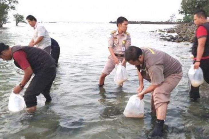 BKIPM Jambi lepas liarkan 61.200 benih lobster