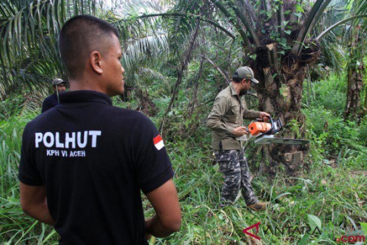 Greenpeace kembali tegaskan tidak anti-sawit
