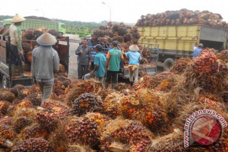 Strategi mengantisipasi penurunan harga sawit