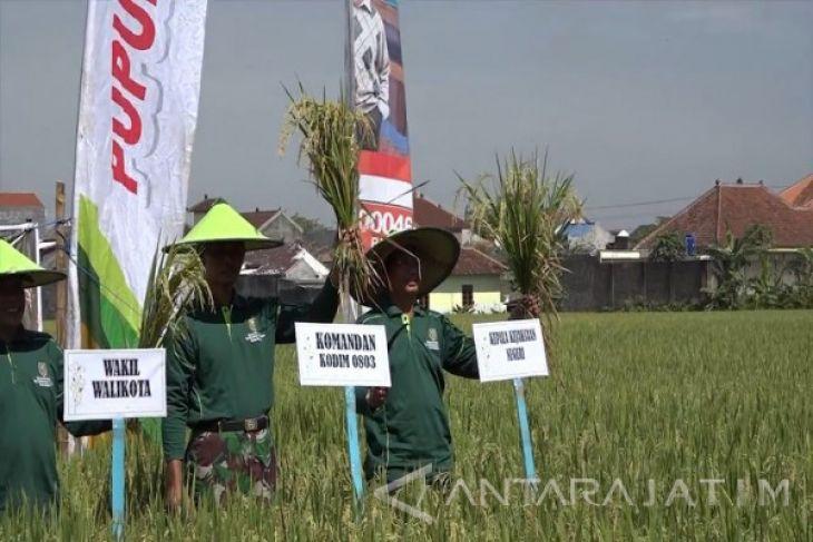 Wali Kota Madiun Panen Padi Teknologi