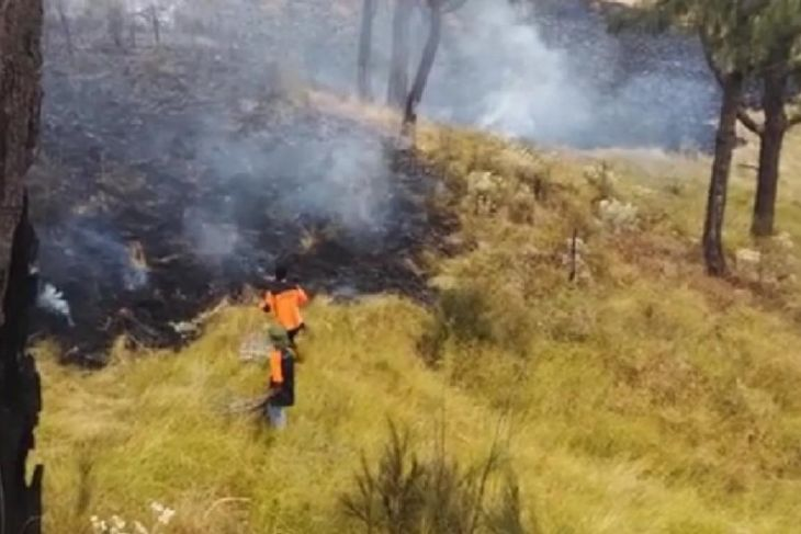 Kebakaran Hutan Gunung Lawu Diprediksi Capai 30 Hektare