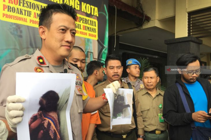 Polisi Tangkap Pelaku Jual Beli Lutung Jawa