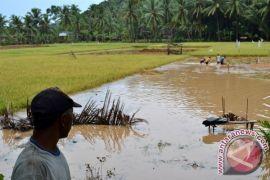 Dinas Pertanian: Cuaca Ekstrem Tidak Kurangi Hasil Pertanian