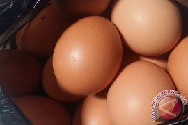 Harga telur di Indramayu tembus 27 ribu/kilogram