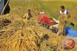 Produksi beras Cianjur 2017 bakal surplus