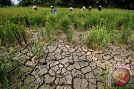 Dinas Pertanian Cianjur tingkatkan pengawasan karena cuaca ekstrem