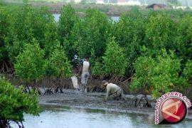 Warga tanam ribuan mangrove terkait rekondisi kawasan pesisir Pantai Cirebon