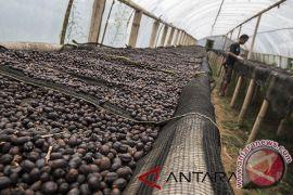 Garut siapkan bibit kopi untuk 350 hektare