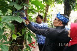 Kota Bandung miliki Forest Walk sepanjang dua kilometer