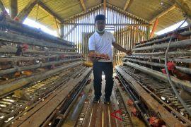 Cagub Jabar Tinjau Peternakan Ayam