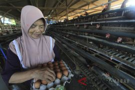 Satpol PP Cianjur segel peternakan ayam tak berizin