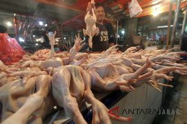 Harga daging ayam di Garut berangsur turun