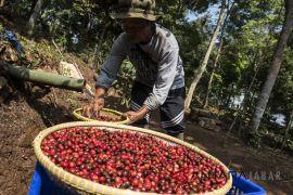 Taiwan sepakati kontrak ekspor kopi Garut