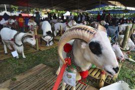Kontes hewan ternak Jawa Barat
