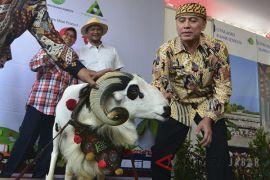 Iriawan meninjau kontes ternak Jawa Barat
