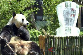 Giant Panda Global Award