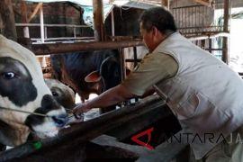 Dinas Peternakan Indramayu inspeksi penjualan hewan kurban