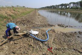 Petani di Garut beralih profesi akibat kemarau