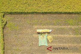 Target produksi padi