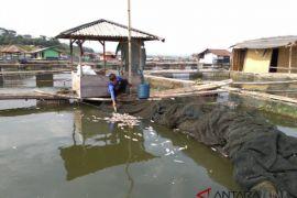 Petani ikan Cianjur merugi hingga ratusan juta rupiah