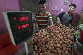 Kenaikan harga acuan telur ayam