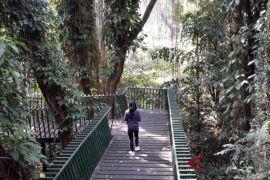 Melepas penat di hutan kota Forest Walk Baksil