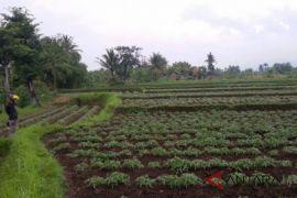 Cianjur perlu revisi tata ruang terkait pemukiman di lahan pertanian