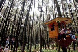 Realisasi program Hutan Sosial