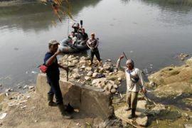 Buaya yang bebas di sungai Cileungsi-Bekasi lebih dari tiga ekor