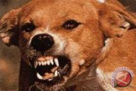 700 ekor anjing liar di Cianjur dimatikan