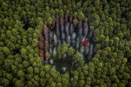 Hutan lindung Jawa Barat
