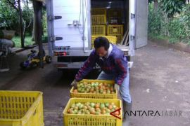 Petani sayur Cianjur terancam gagal panen akibat ini