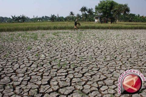 Lahan pertanian di Garut terancam kekeringan